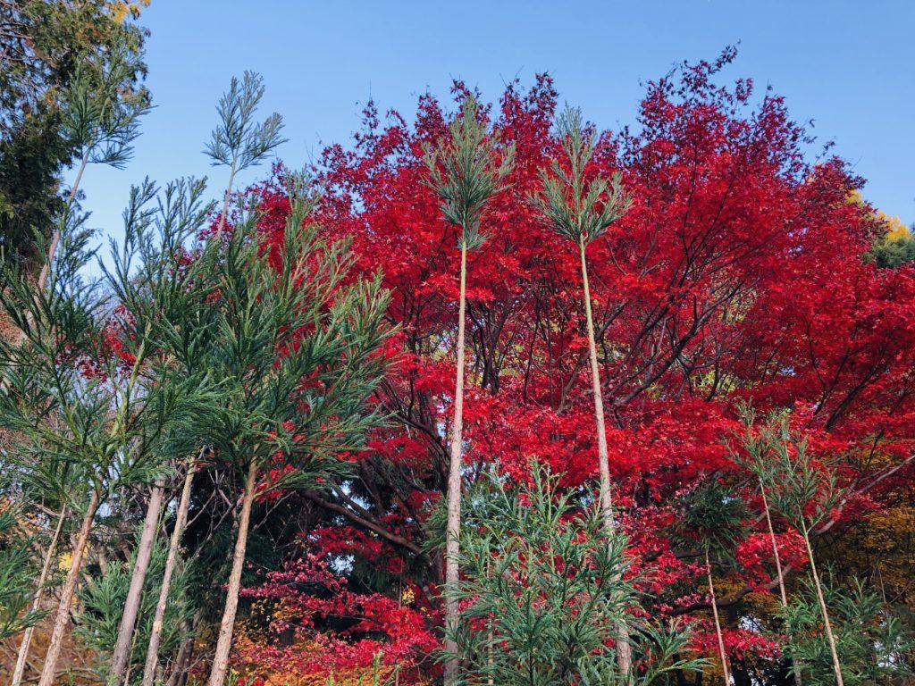 竜安寺の周辺紅葉イメージ