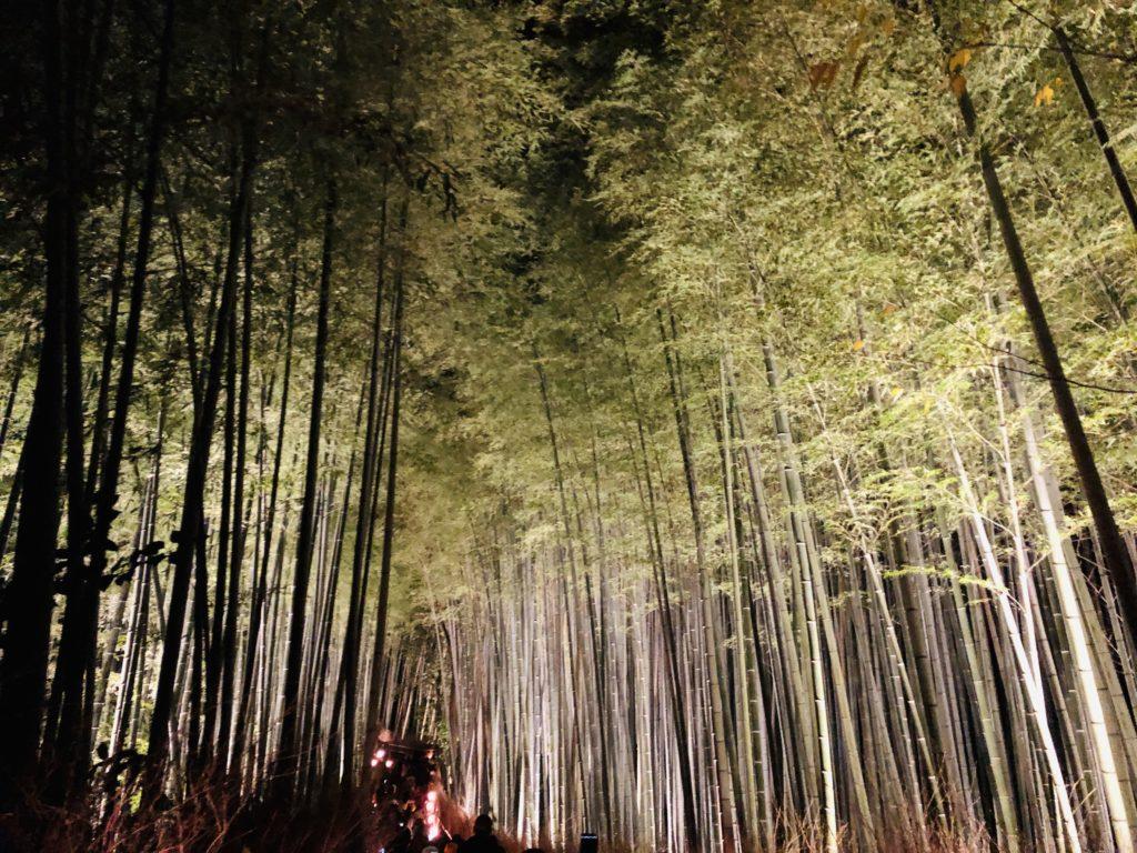 嵐山ライトアップイメージ